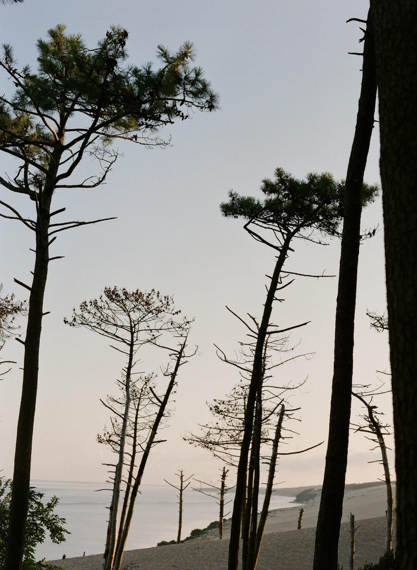 bordeaux-plage-pin-arbre-coucher-soleil