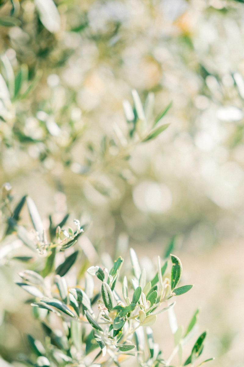 Feuilles de branches d'un olivier mis en scène par la wedding planner Amélie Pichon Weddings